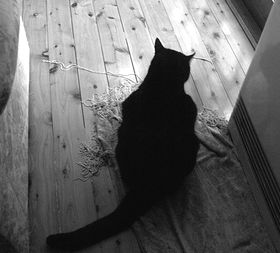 cat_heater.jpg